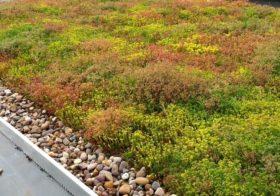 Waarom wordt groene dakbedekking steeds populairder?